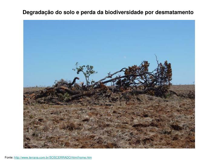 Degradação do solo e perda da biodiversidade por desmatamento