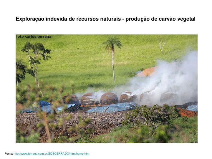 Exploração indevida de recursos naturais - produção de carvão vegetal
