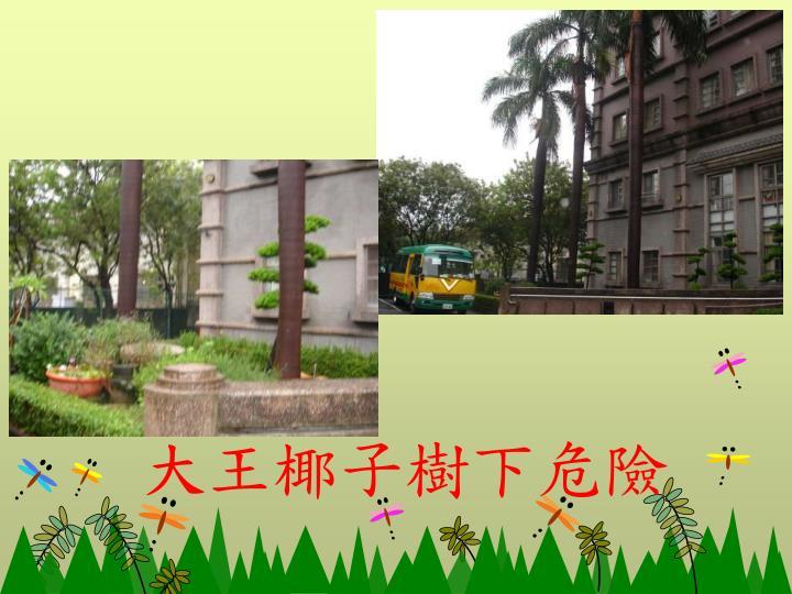 大王椰子樹下危險