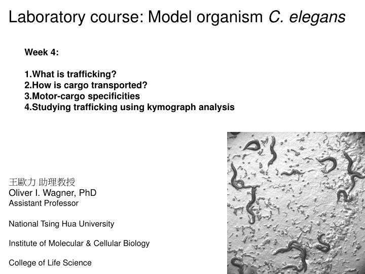 Laboratory course: Model organism