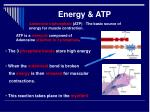 energy atp1