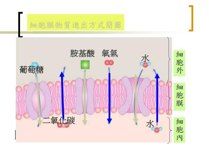 細胞膜物質進出方式簡圖