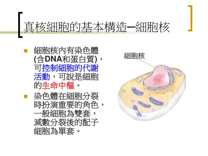真核細胞的基本構造─細胞核