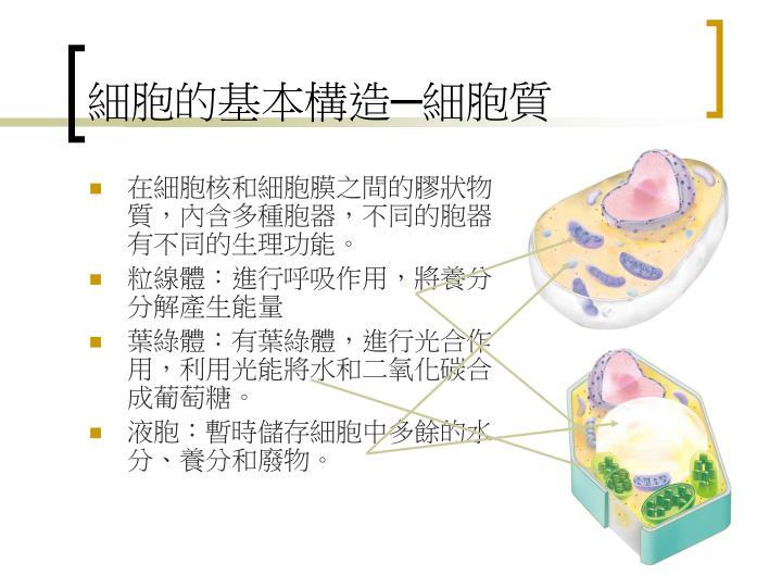 細胞的基本構造─細胞質