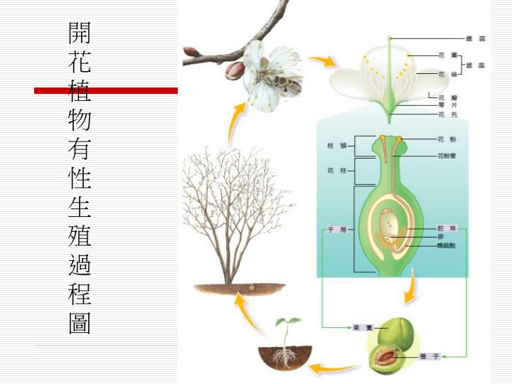 開花植物有性生殖過程圖