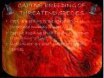 captive breeding of threatend species