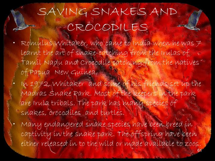 SAVING SNAKES AND CROCODILES