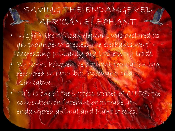 SAVING THE ENDANGERED AFRICAN ELEPHANT