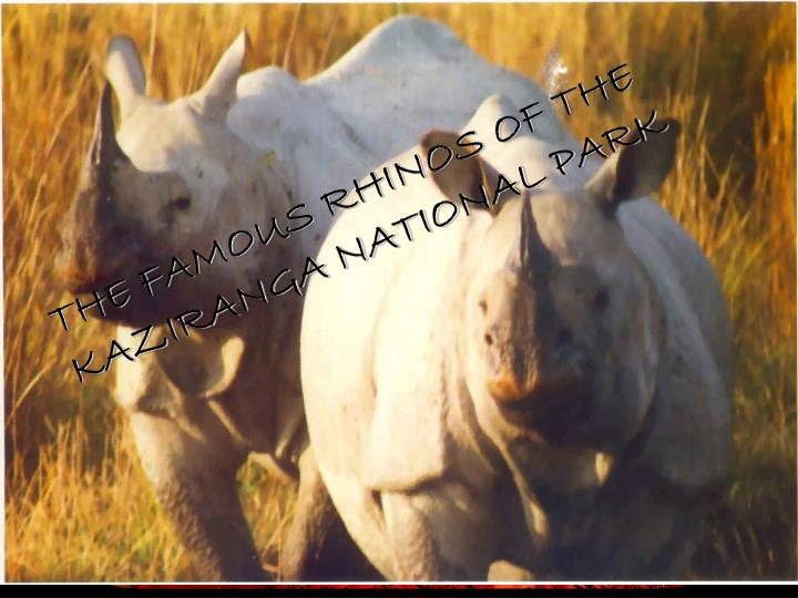 THE FAMOUS RHINOS OF THE KAZIRANGA NATIONAL PARK