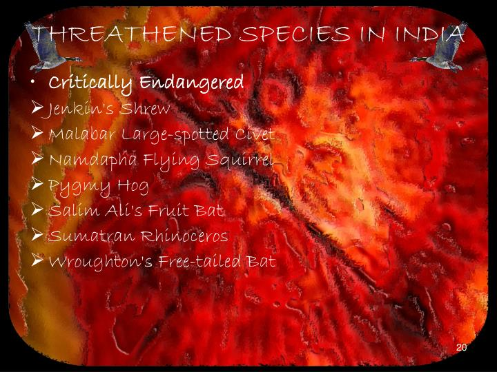 THREATHENED SPECIES IN INDIA