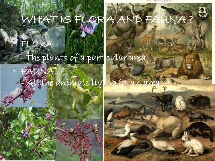 WHAT IS FLORA AND FAUNA ?