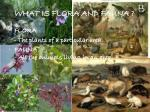 what is flora and fauna