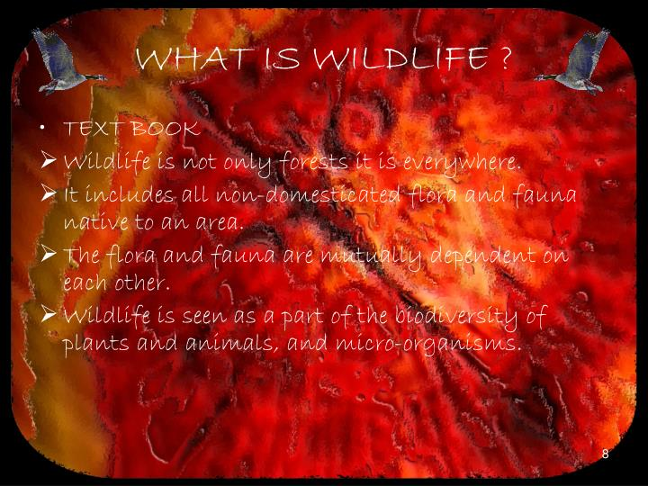 WHAT IS WILDLIFE ?