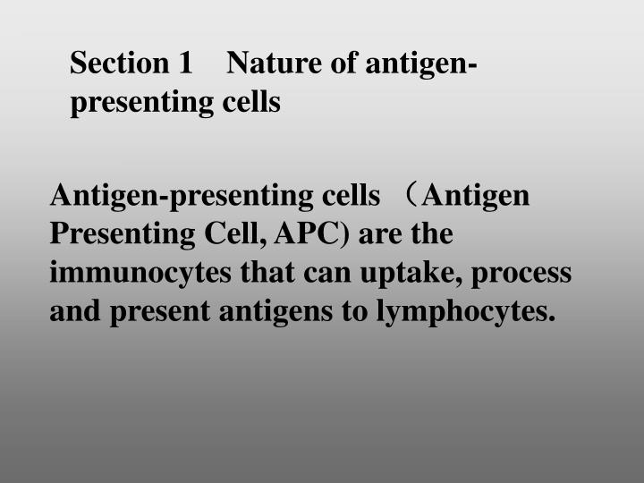 Section 1    Nature of antigen-presenting cells