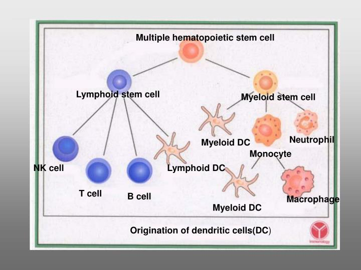 Multiple hematopoietic stem cell