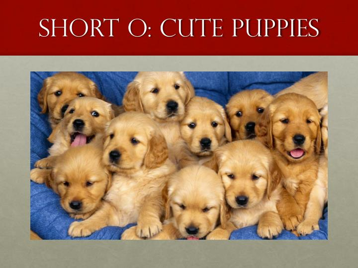 Short O: cute Puppies