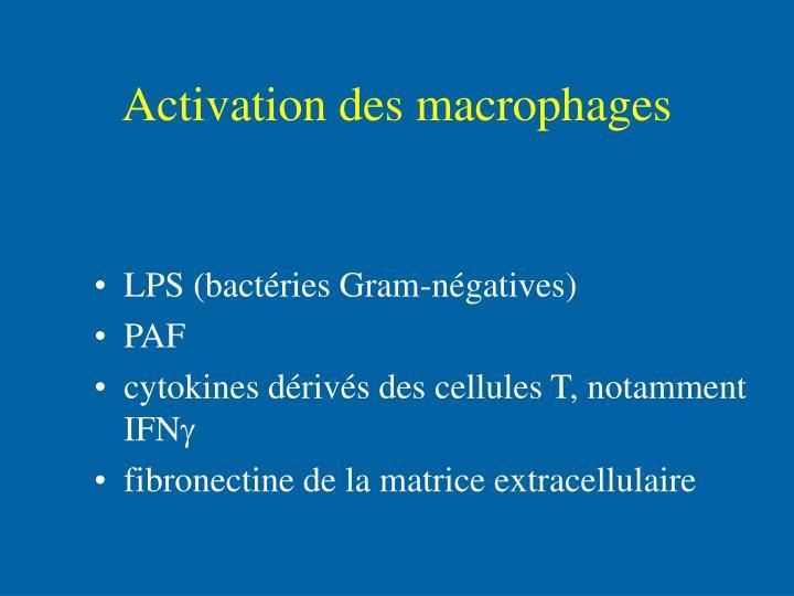 Activation des macrophages