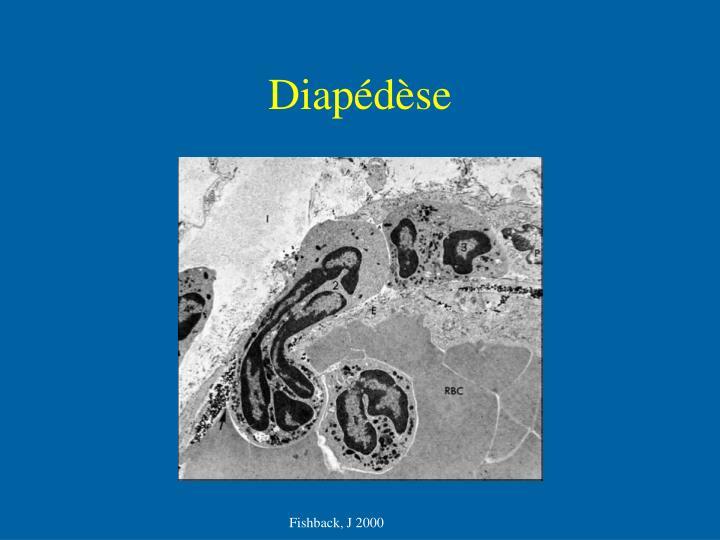 Diapédèse