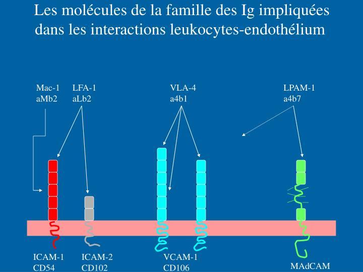 Les molécules de la famille des Ig impliquées