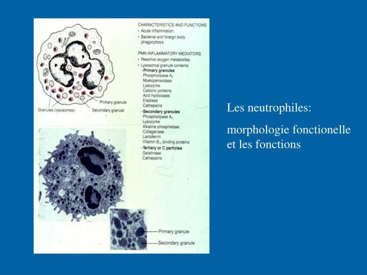 Les neutrophiles: