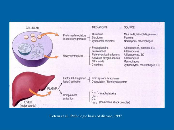 Cotran et al., Pathologic basis of disease, 1997