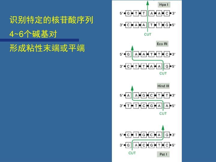 识别特定的核苷酸序列