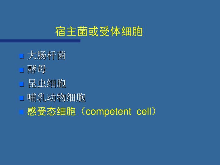 宿主菌或受体细胞