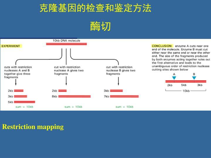 克隆基因的检查和鉴定方法