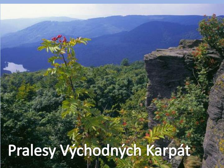 Pralesy Východných Karpát
