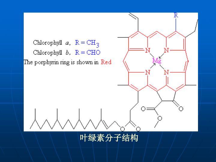 叶绿素分子结构