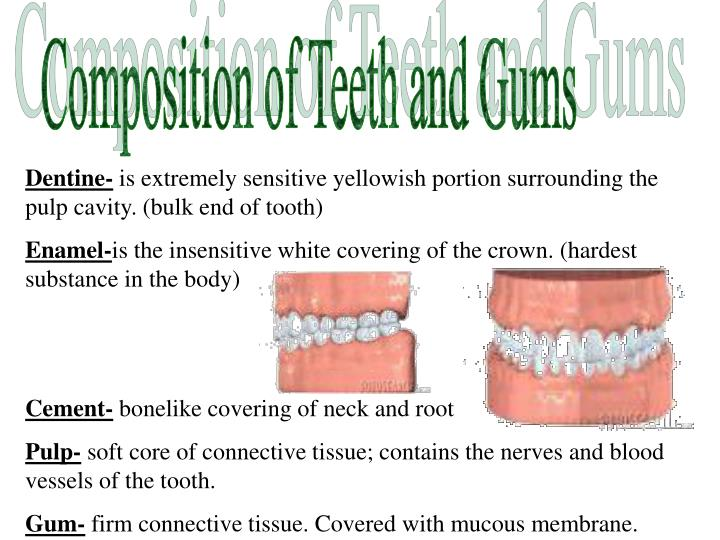 Composition of Teeth and Gums