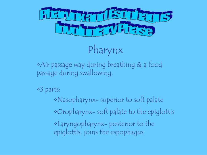 Pharynx and Esophagus