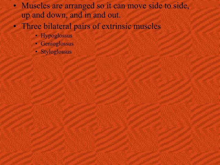 Muscles are arranged so it can move side to side, up and down, and in and out.