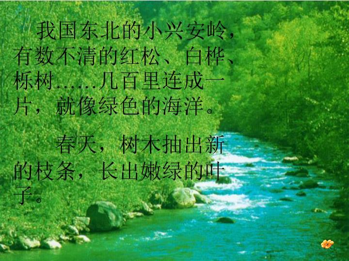 我国东北的小兴安岭,有数不清的红松、白桦、栎树
