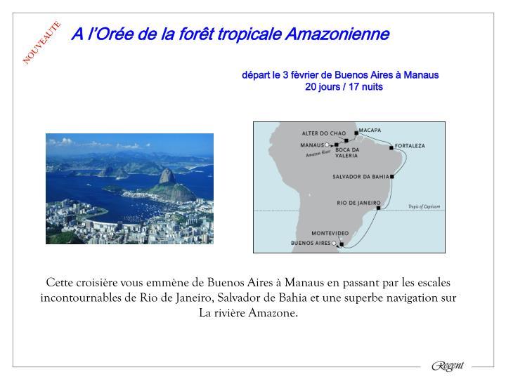A l'Orée de la forêt tropicale Amazonienne