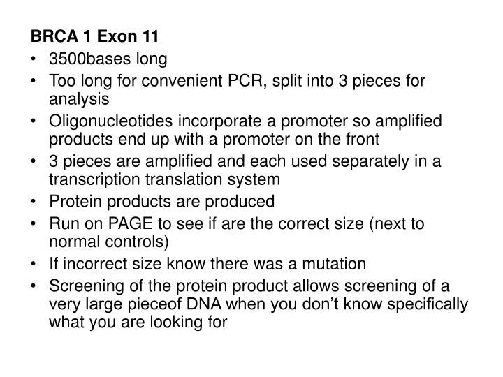 BRCA 1 Exon 11
