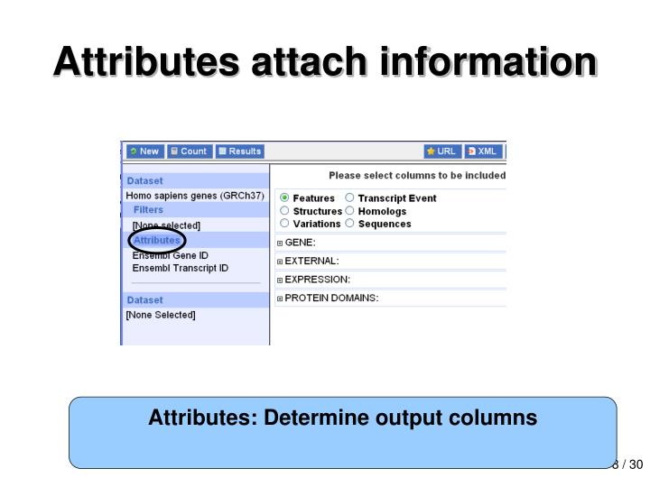 Attributes attach information