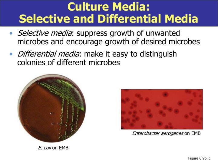 Culture Media: