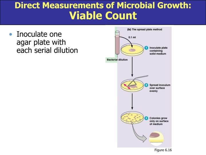 Direct Measurements of Microbial Growth: