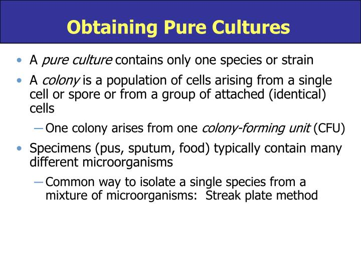 Obtaining Pure Cultures