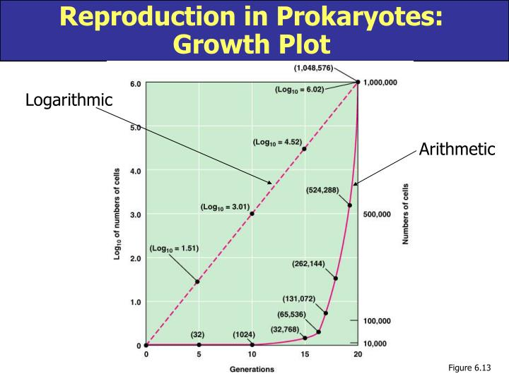 Reproduction in Prokaryotes: