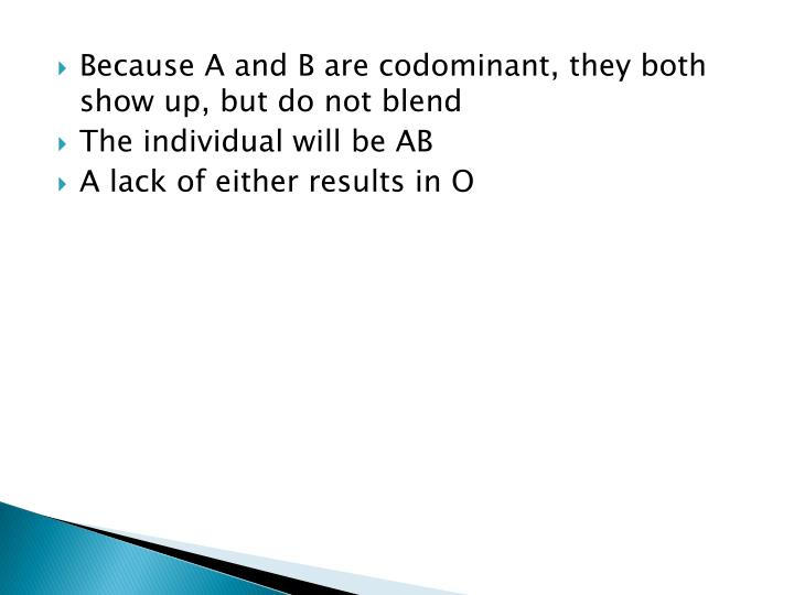 Because A and B are codominant, they both show up, but do not blend