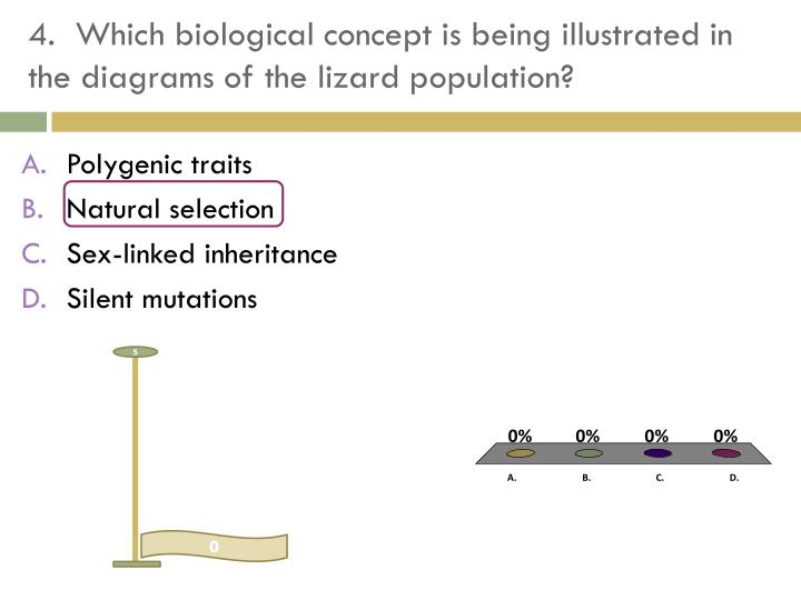 4.  Which biological concept is being illustrated in the diagrams of the lizard population?