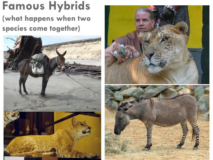 Famous Hybrids