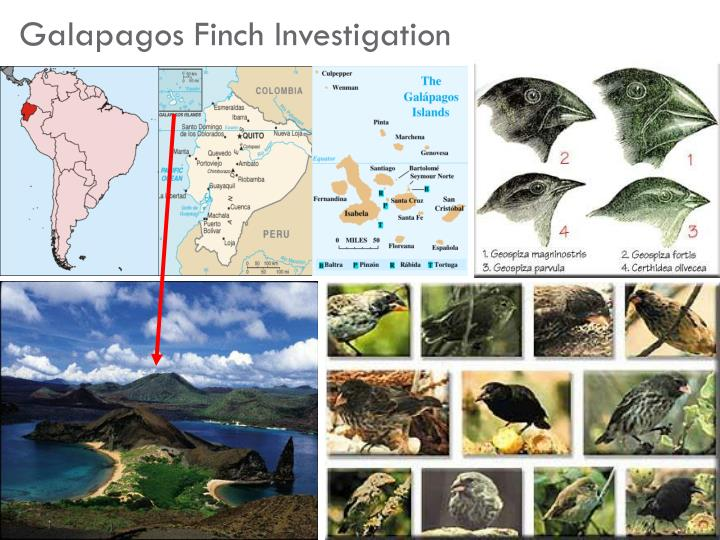 Galapagos Finch Investigation