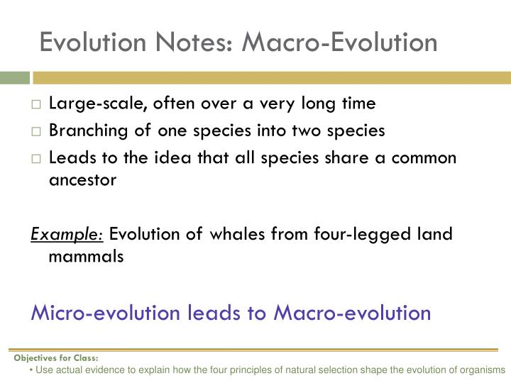 Evolution Notes: Macro-Evolution
