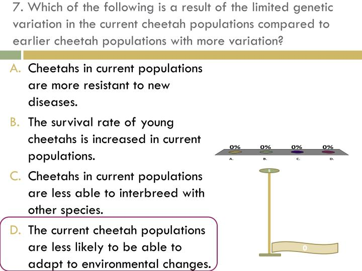 7. Which of the following is a result of the limited genetic variation in the current cheetah populations compared to earlier cheetah populations with more variation?