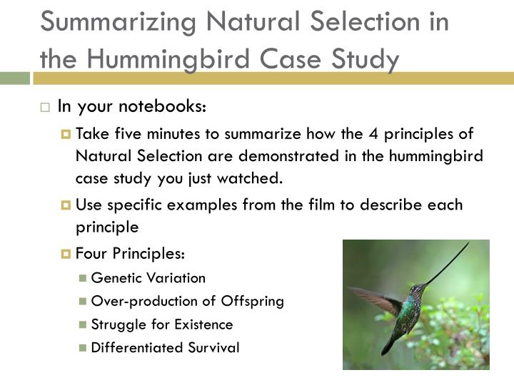 Summarizing Natural Selection in the Hummingbird Case Study