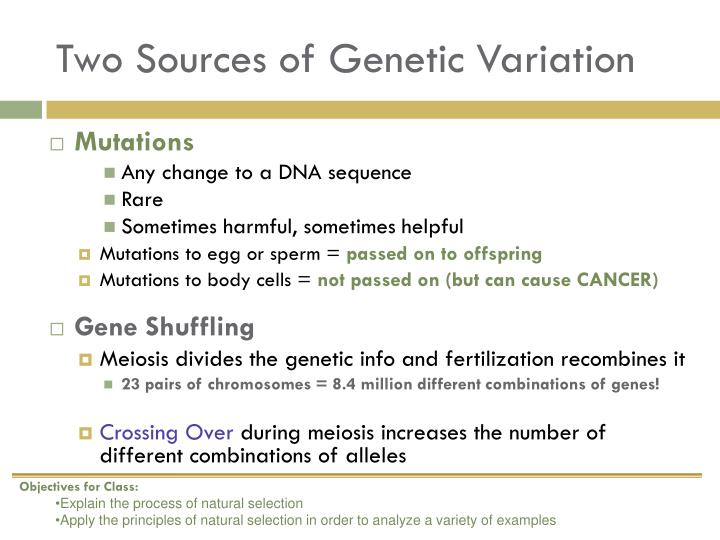 Two Sources of Genetic Variation