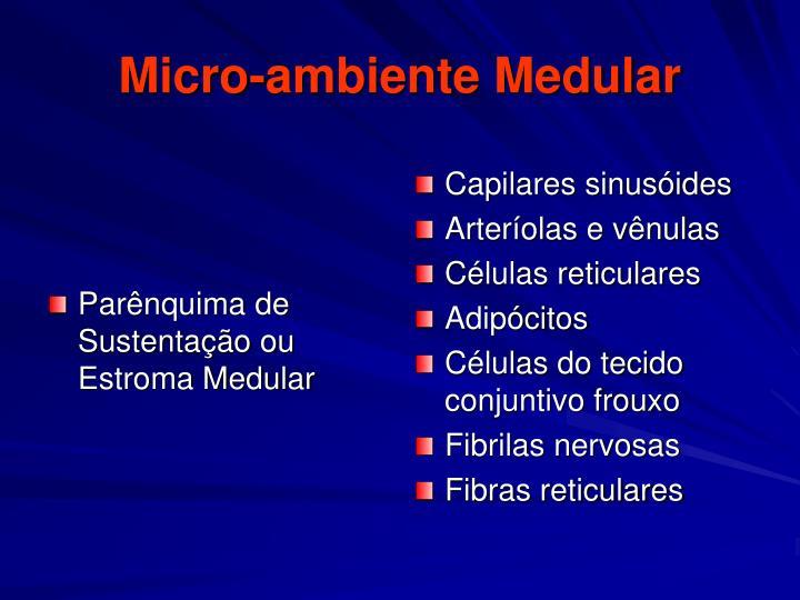 Parênquima de Sustentação ou Estroma Medular